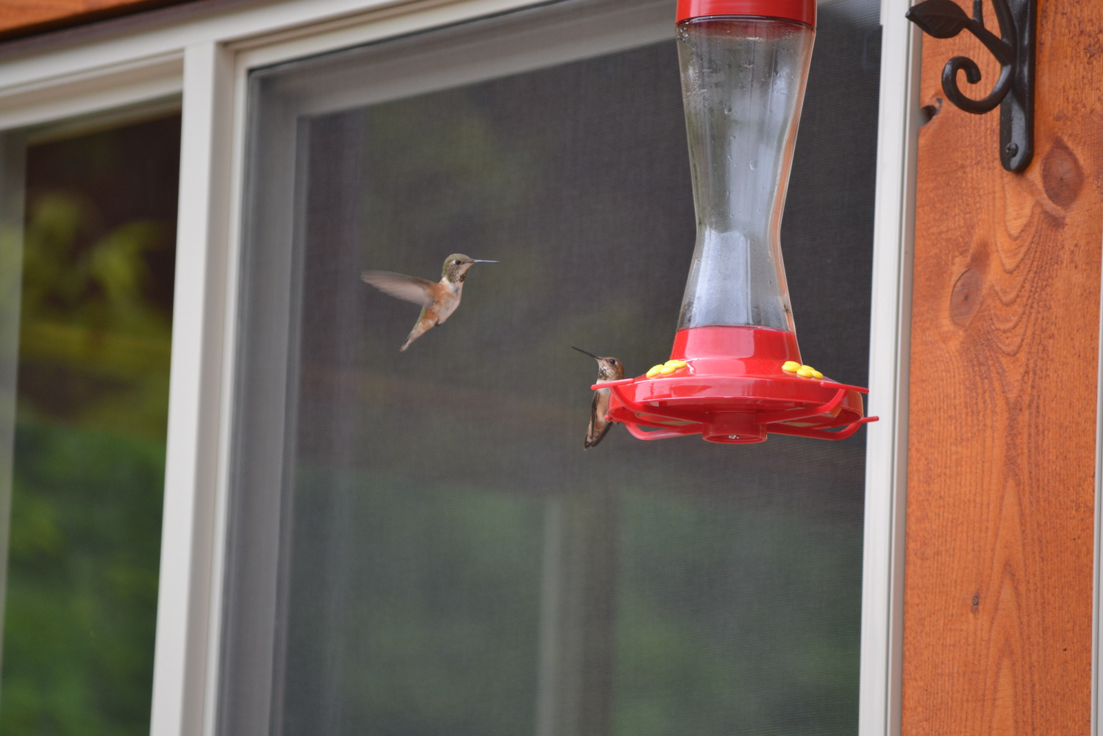Hummingbird at feeder at Alpine Meadows Resort
