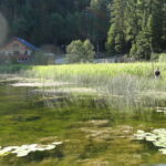 Marsh at Alpine Meadows Resort