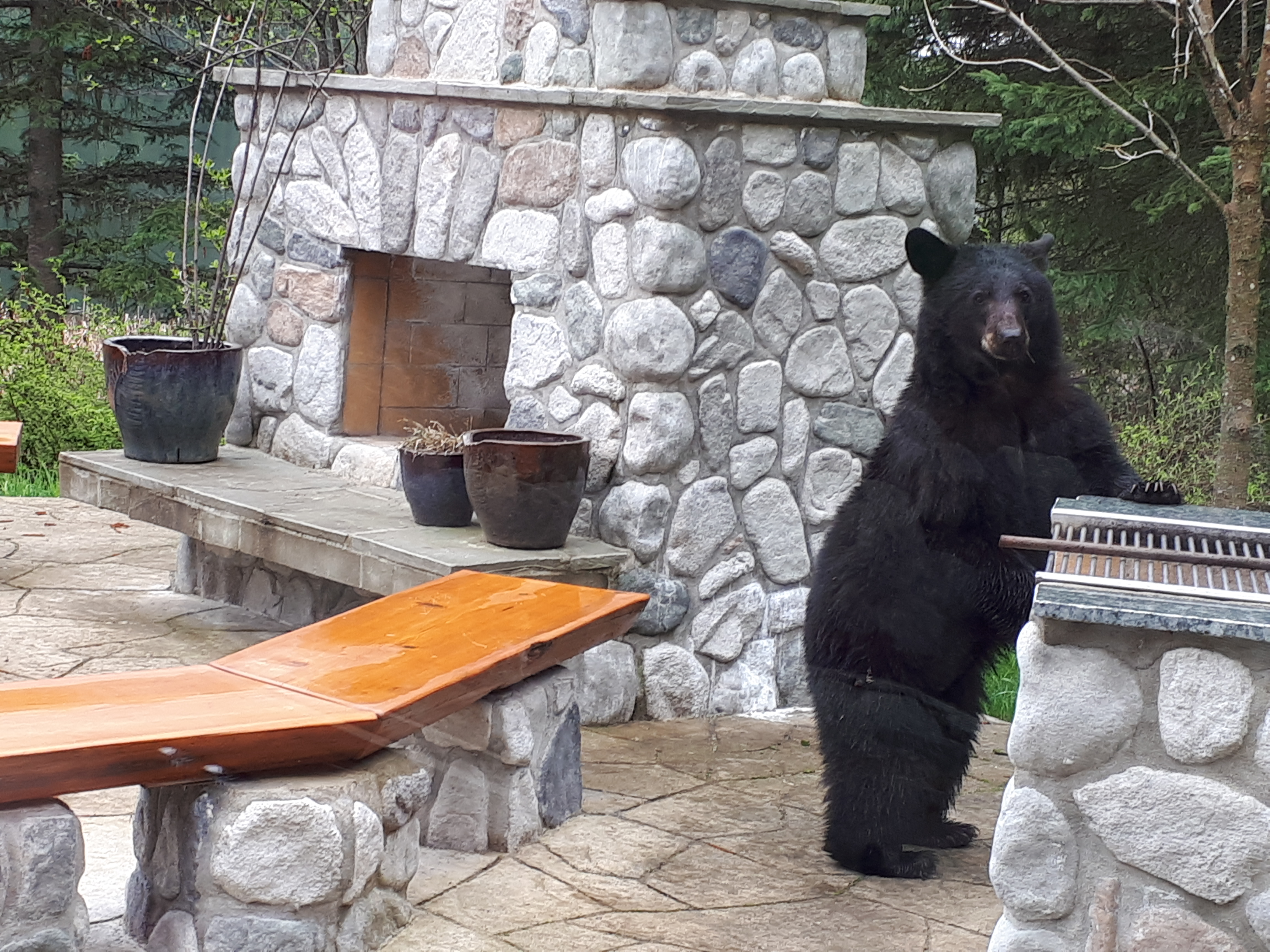 bear-bbq-alpine-meadows-clearwater