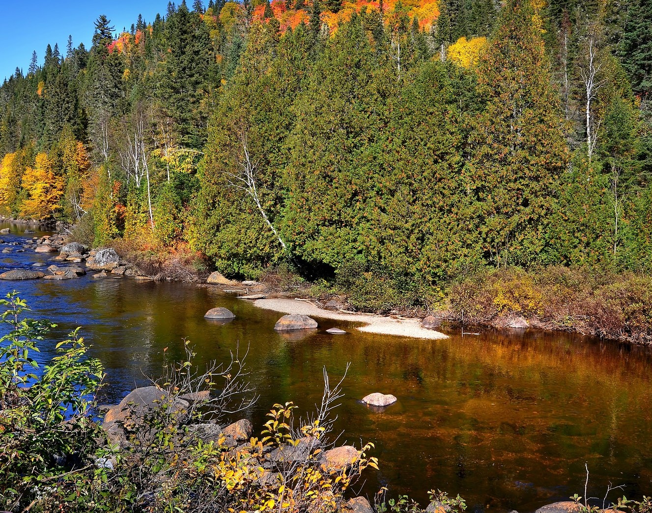 fall-colors-on-riverbank