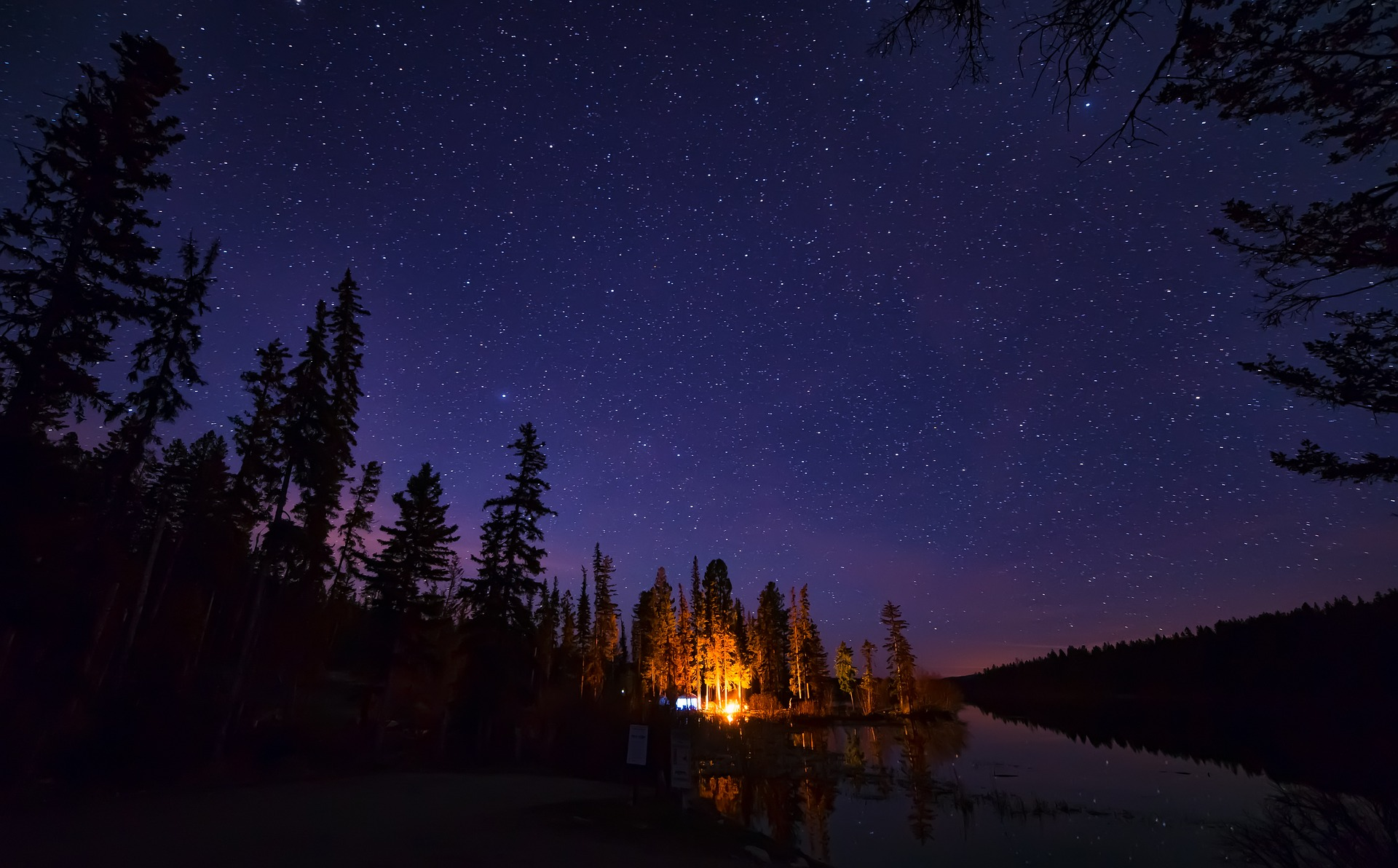 Starry Sky with fir tree silhouettes