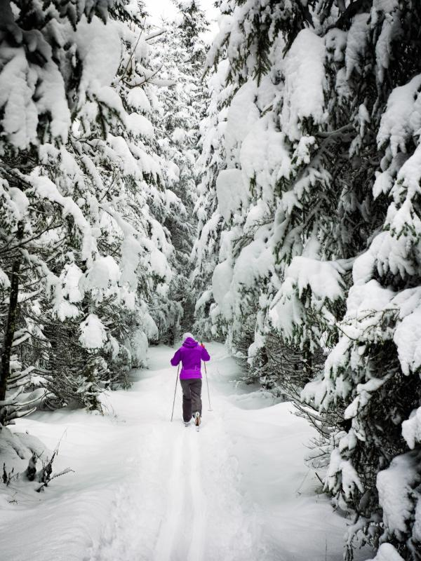 Cross Country Skiing in Wells Gray
